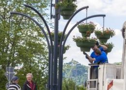 Personen auf einem LKW montieren Blumenkübel an einer Laterne - im Hintergrund der Drachenfels
