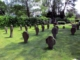 Foto zeigt die klienen Grabkreuze aus dem 17. und 18. Jahrhundert auf dem Rasen im Sonnenschein