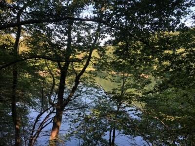 Zwischen Bäumen und Blättern blitzt der Himberger See hervor.